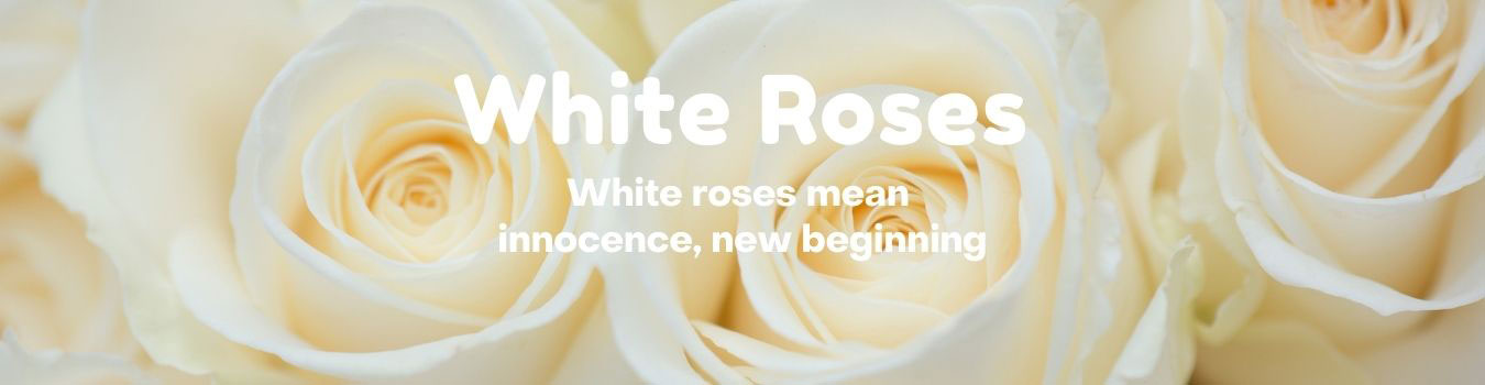 White Roses from Knight's Flowers