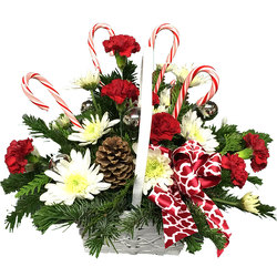 Candy Cane Lane from your local Clinton,TN florist, Knight's Flowers
