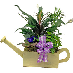 Watering Can Planter from your local Clinton,TN florist, Knight's Flowers