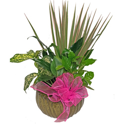 Dish Garden in a Ceramic Container from your local Clinton,TN florist, Knight's Flowers