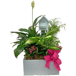 Colorful Birdhouse Planter from your local Clinton,TN florist, Knight's Flowers