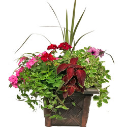 Large Blooming Combination Planter from your local Clinton,TN florist, Knight's Flowers