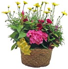 Combination Planter from your Clinton, TN florist