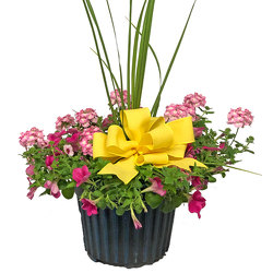 Medium Blooming Combination Planter from your local Clinton,TN florist, Knight's Flowers