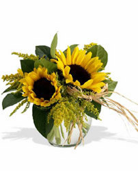 Sassy Sunflowers from your local Clinton,TN florist, Knight's Flowers